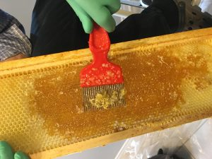 Photo showing how to uncap cells of honey