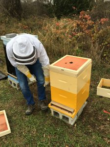 Lauchie gets stung by a bee while winterizing the hive.