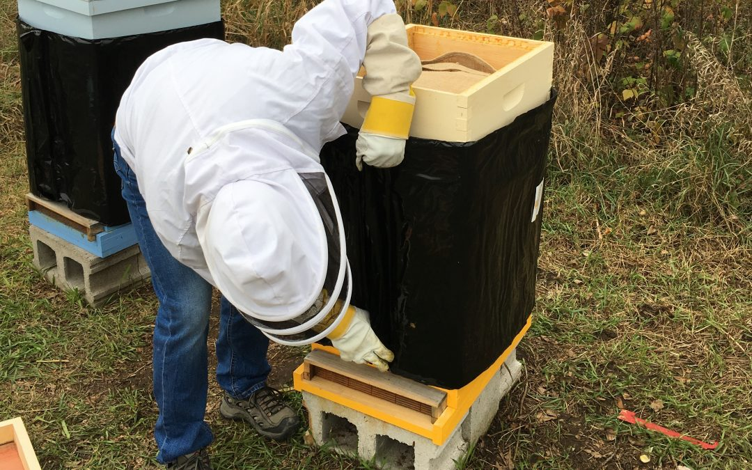 Lauchie adds a bee cozy to the hive.