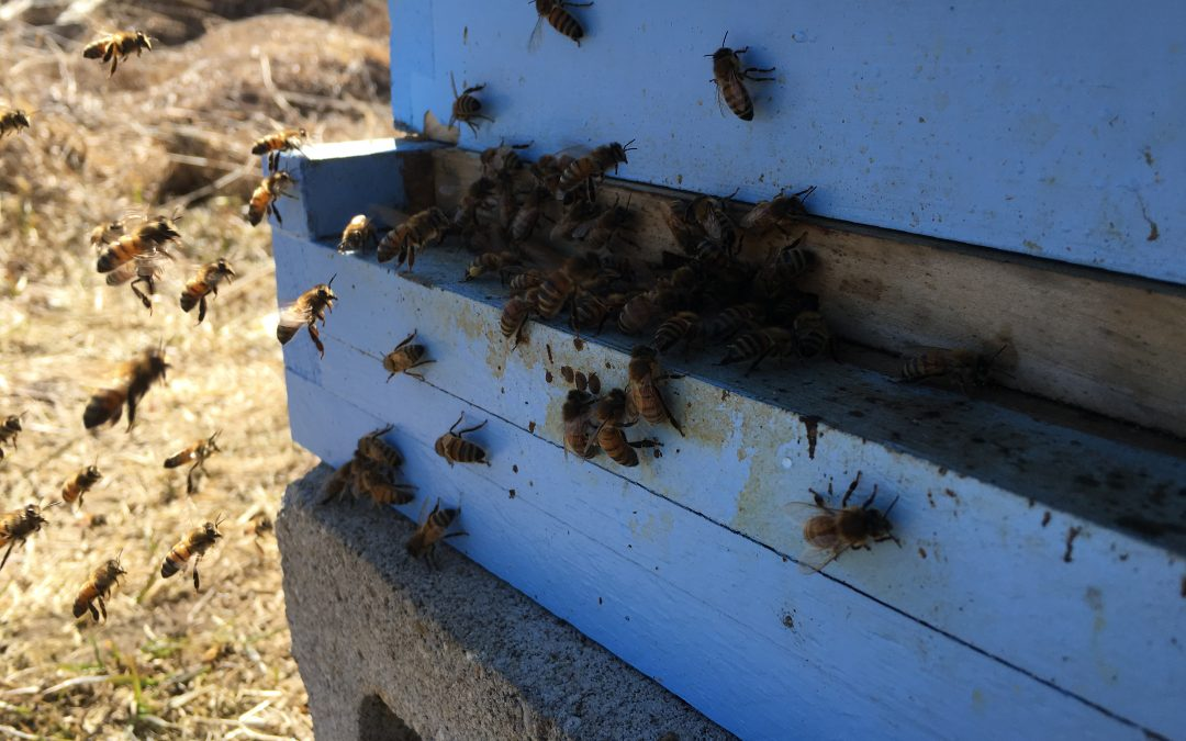 Our bees survived the winter!