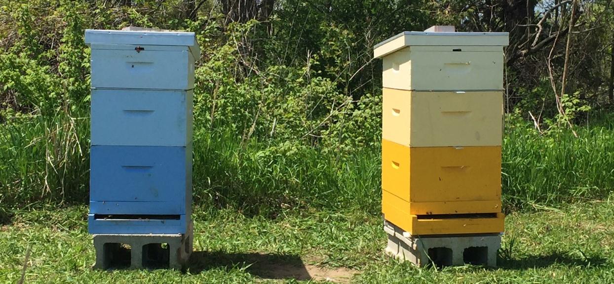 Blue skies & Sunshine hive